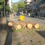 alberi-tagliati-09
