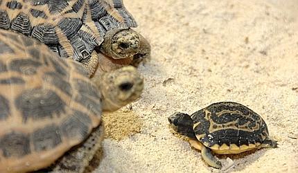 Ponente varazzino genova all acquario sono nate for Acquario di tartarughe